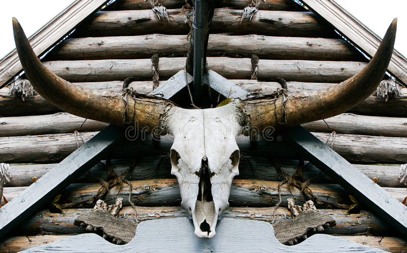 Buffalo skull royalty free stock photo