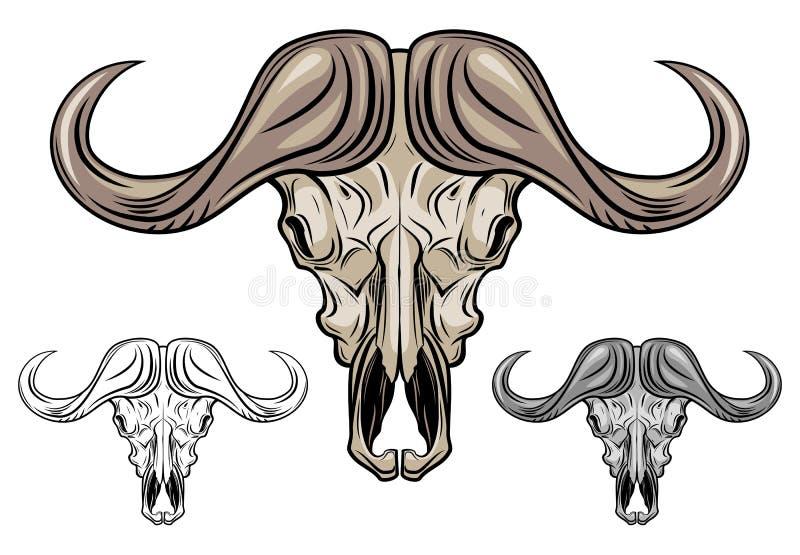 Buffalo Skull Isolated On White Stock Image