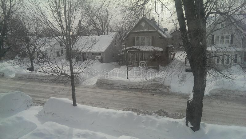 Buffalo Snow stock photo