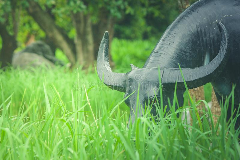 Buffalo statue standing on green grass in rice filed. royalty free stock photography
