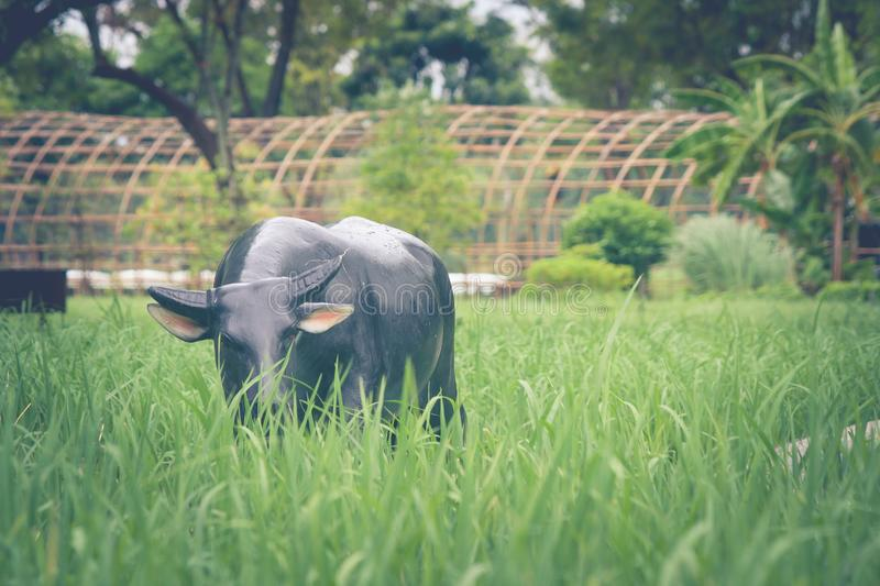 Buffalo statue standing on green grass in rice filed. stock photo