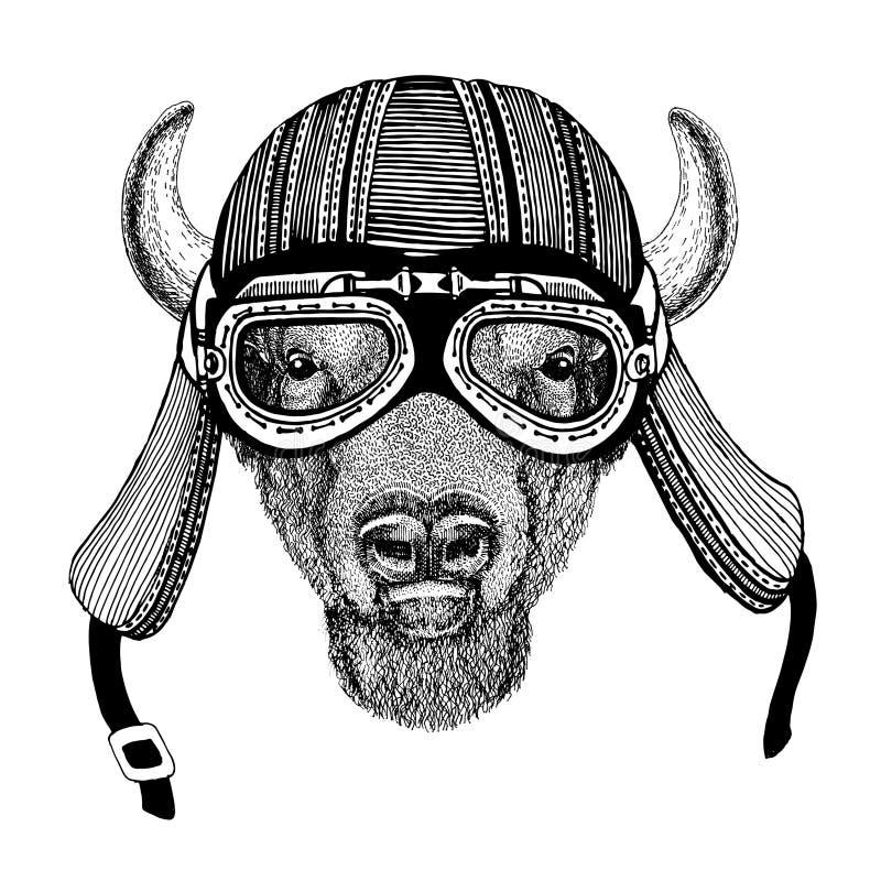 Buffel bison, oxe, dragen bild för tjur hand av den djura bärande motorcykelhjälmen för t-skjortan, tatuering, emblem, emblem, lo royaltyfri foto