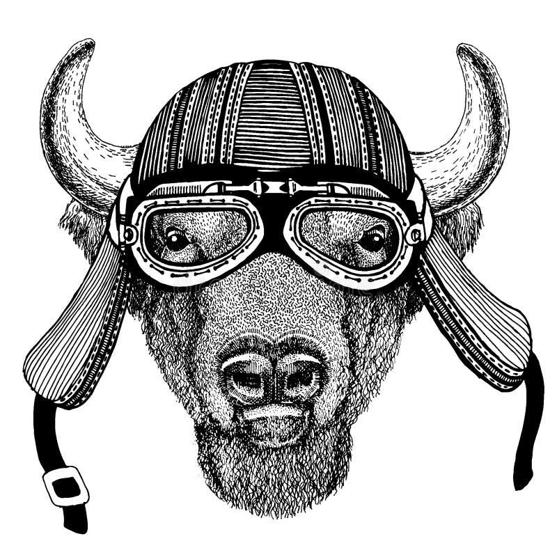 Buffel bison, oxe, för löst hjälm för motorcykel cyklistdjur för tjur bärande r stock illustrationer