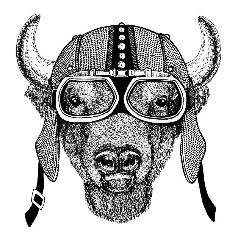 Buffel bison, oxe, lös djur bärande motorcykel för tjur, aero hjälm Cyklistillustration för t-skjortan, affischer, tryck royaltyfri illustrationer