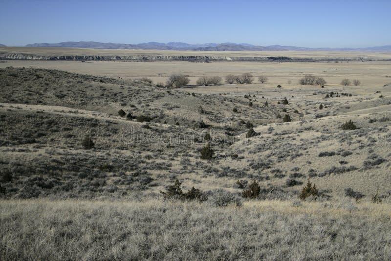 Buffeln hoppar delstatsparken fotografering för bildbyråer