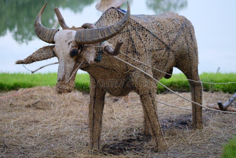 Buffels die van hey of droog gras maken royalty-vrije stock foto