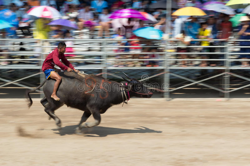 Buffels het rennen festival 2015 de traditie van Thailand stock afbeelding