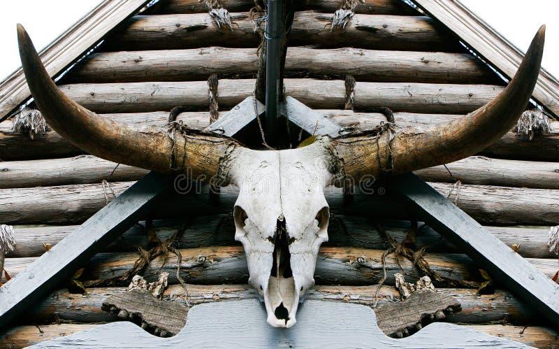buffelskalle royaltyfri foto