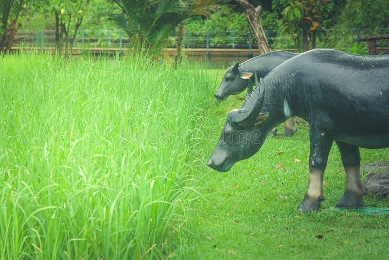 Buffelsstandbeeld die zich op groen gras in ingediende rijst bevinden stock afbeelding