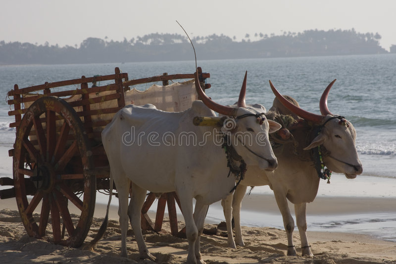 buffelvagn royaltyfri foto
