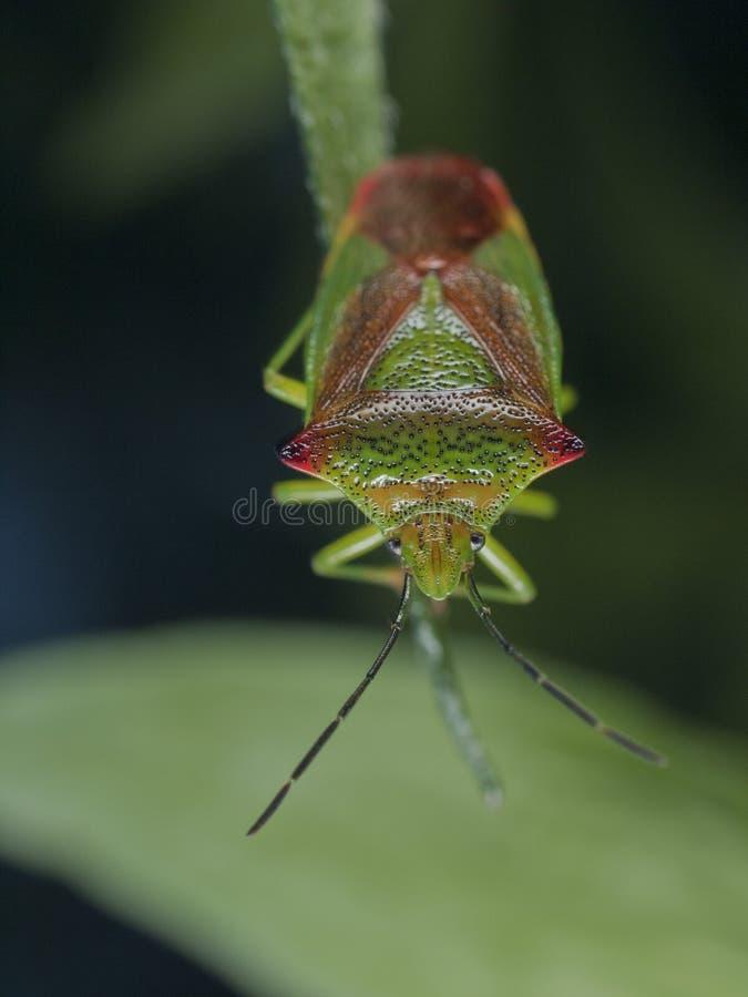 Free Bug Royalty Free Stock Photos - 15903128