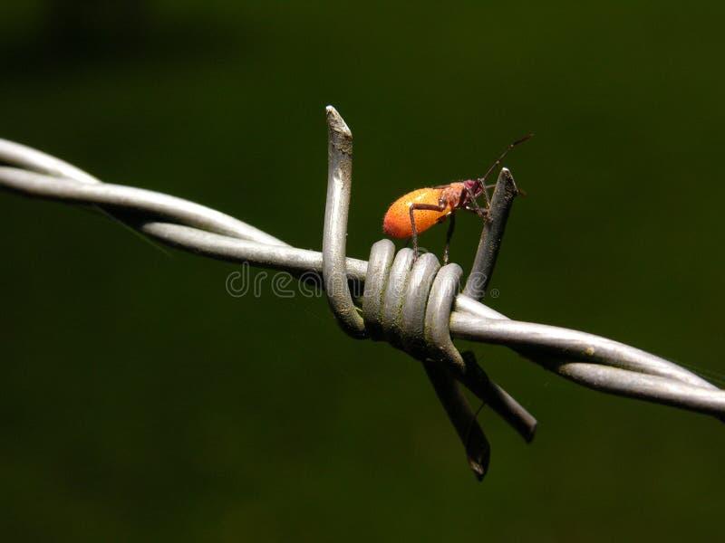 Bug. Foto tirada no s�tio em Porto alegre Rio Grande do Sul stock images