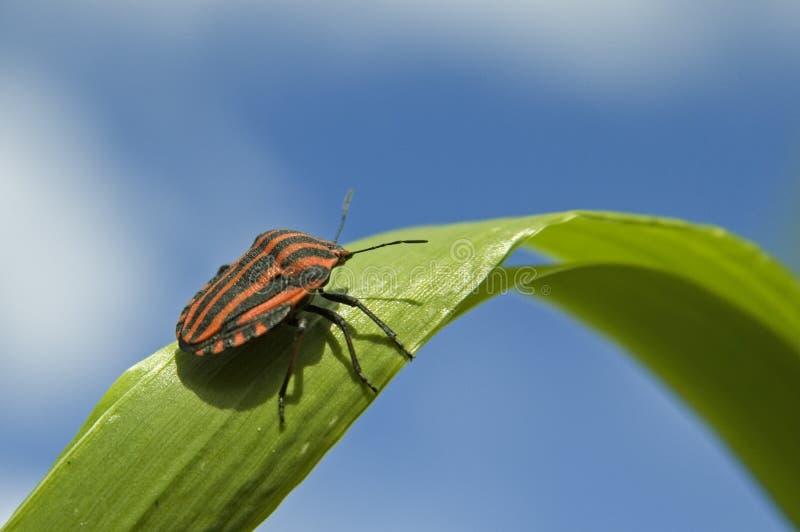 bug 2 fotografia stock