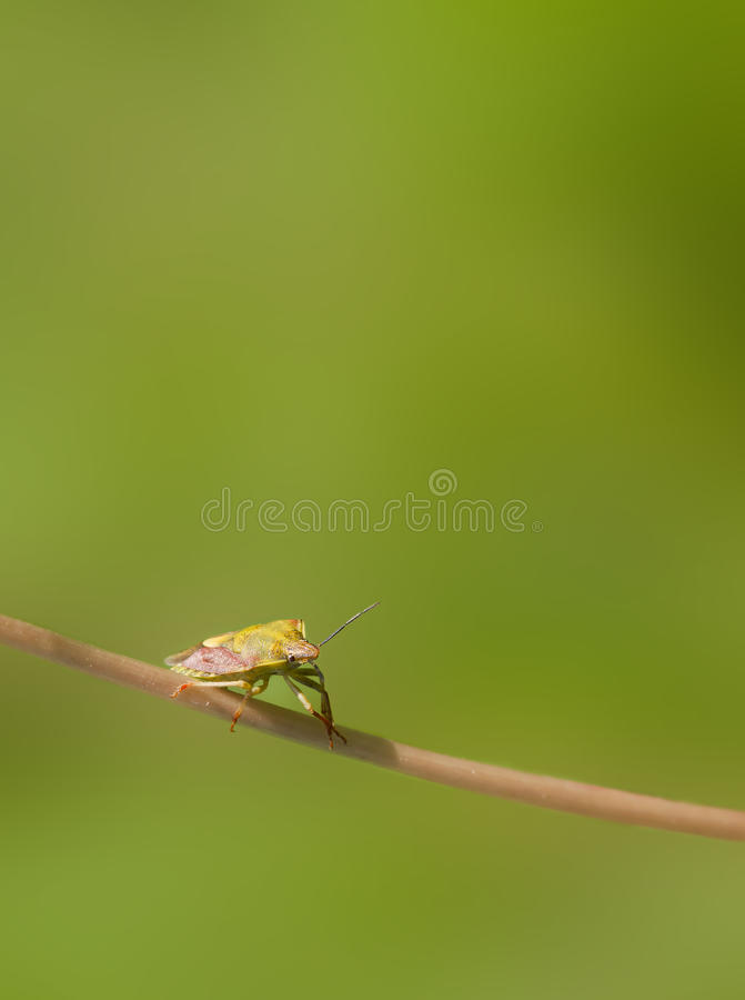 Download Bug stock image. Image of creature, white, outdoors, people - 25520225