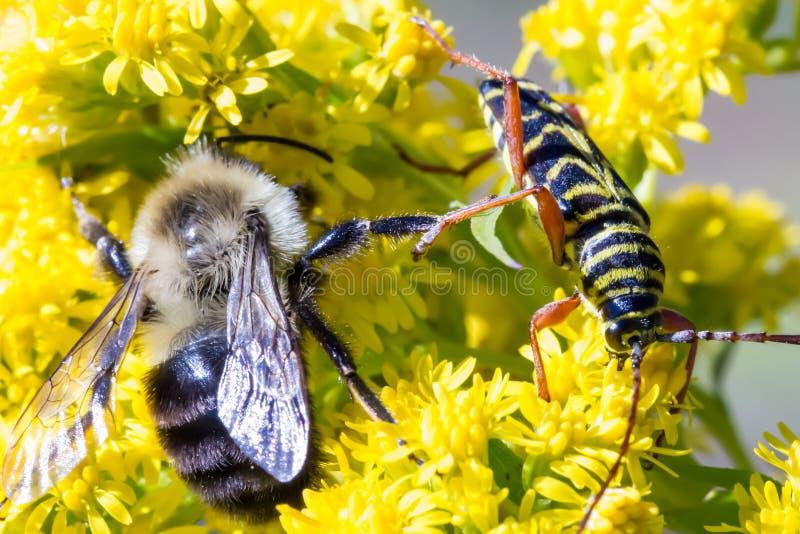 Bug Battle royalty free stock photo