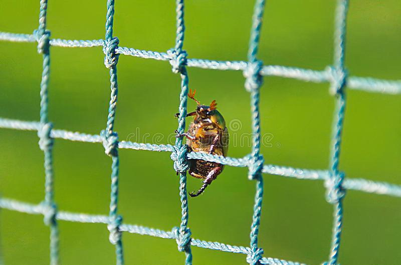 Bug climbing the net royalty free stock photography