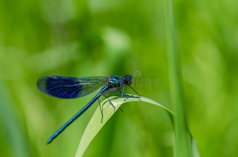 Bug, Close-up, Damselfly royalty free stock photos