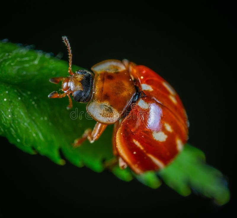 Bug In Close-up Photography stock images
