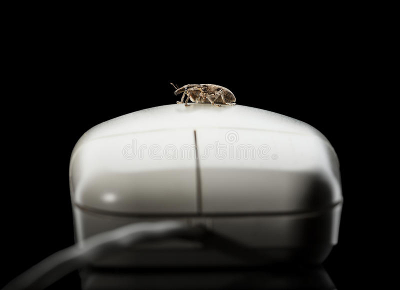 Bug and computer mouse stock images
