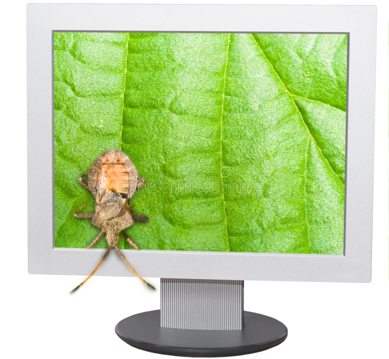 Download Bug and computer screen stock photo. Image of concepts - 8313902