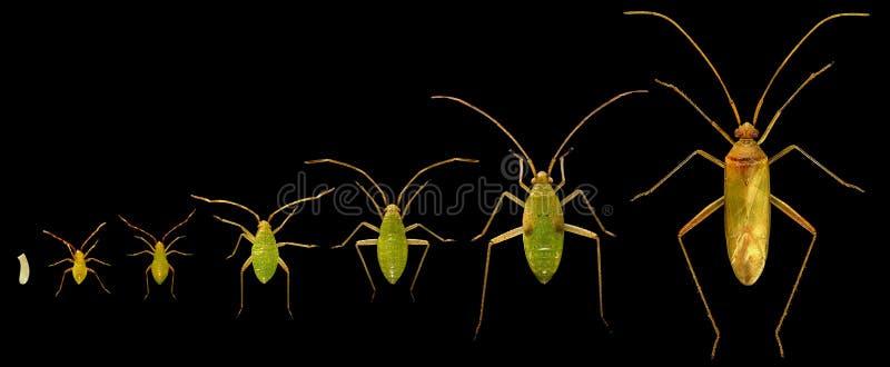 Bug. Life cycle stock photos