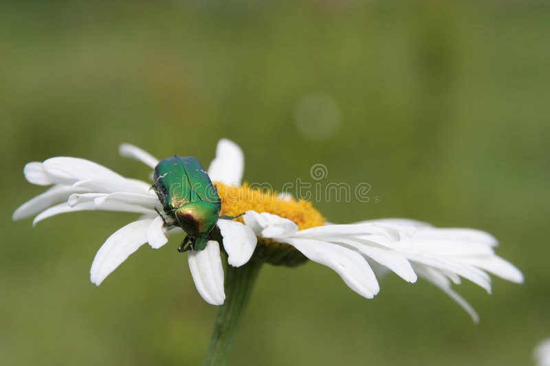 A Bug on a Flower stock photo