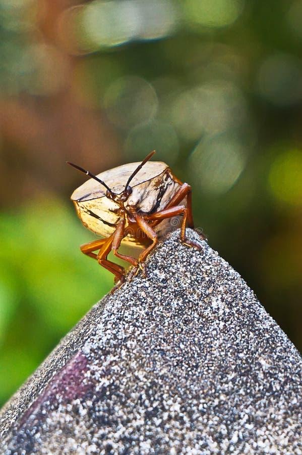 Bug in garden imagen de archivo libre de regalías