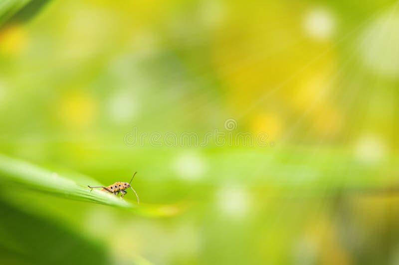 Bug on green leaf defocused background stock photo