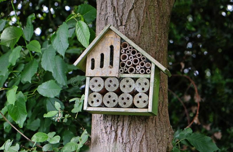 Bug hotel in woodland area royalty free stock image