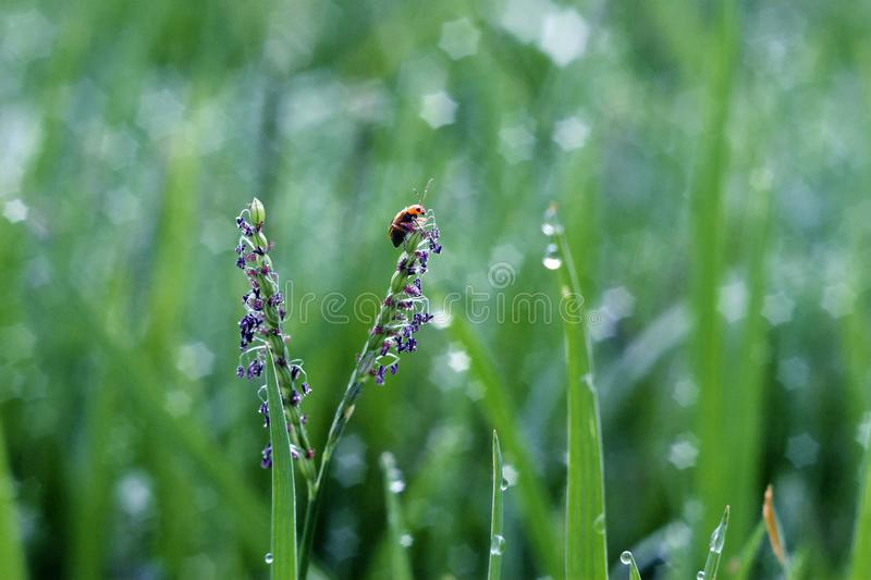 The Bug. Bug is an informal term for a small insect or land-dwelling arthropod royalty free stock photo