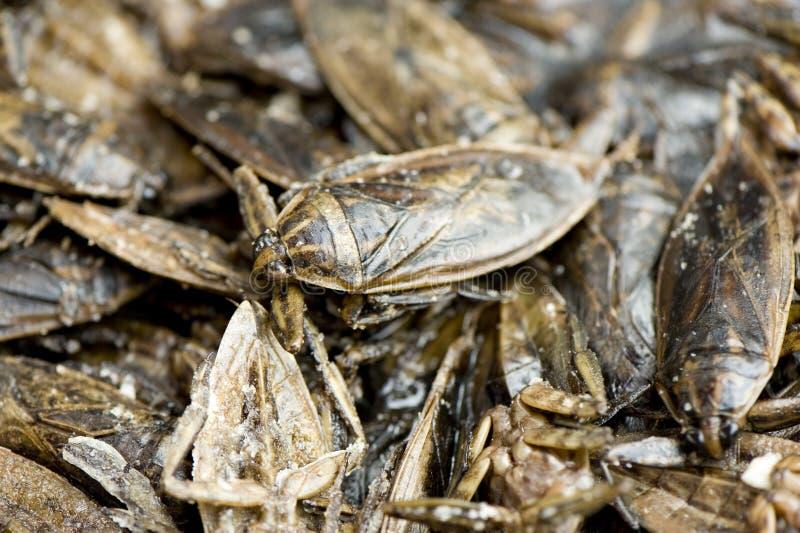 bug jako składników żywności fotografia stock