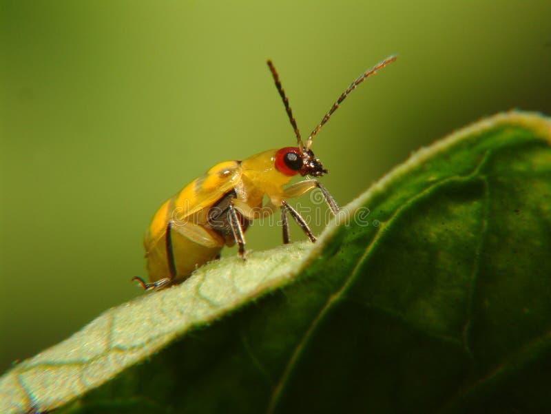 Bug on leaf stock image