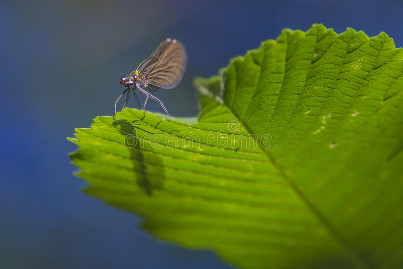 Download Bug on a leaf stock image. Image of insect, bright, close - 33413077