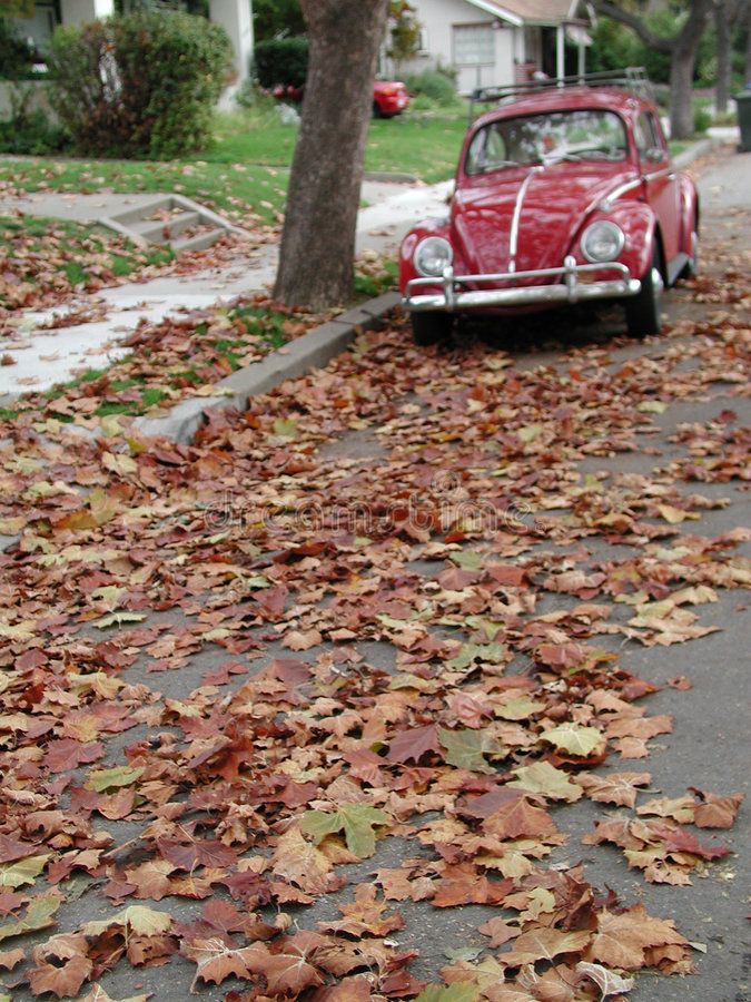 Download Bug and leaves stock photo. Image of fall, nature, ground - 161568