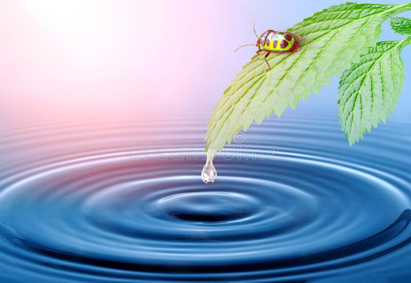 bug life and fresh water with wave pattern royalty free stock photography