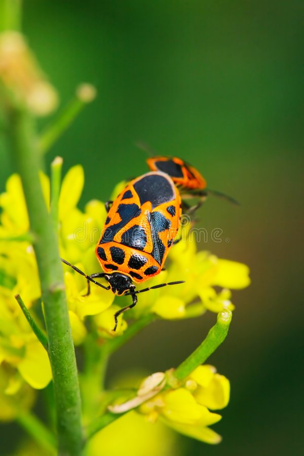 Free Bug On The Plant Royalty Free Stock Images - 5363409
