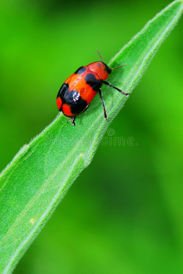Free Bug On The Plant Royalty Free Stock Photo - 5601435