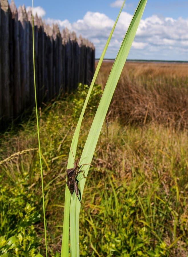 Bug on Plant Stalk stock photography