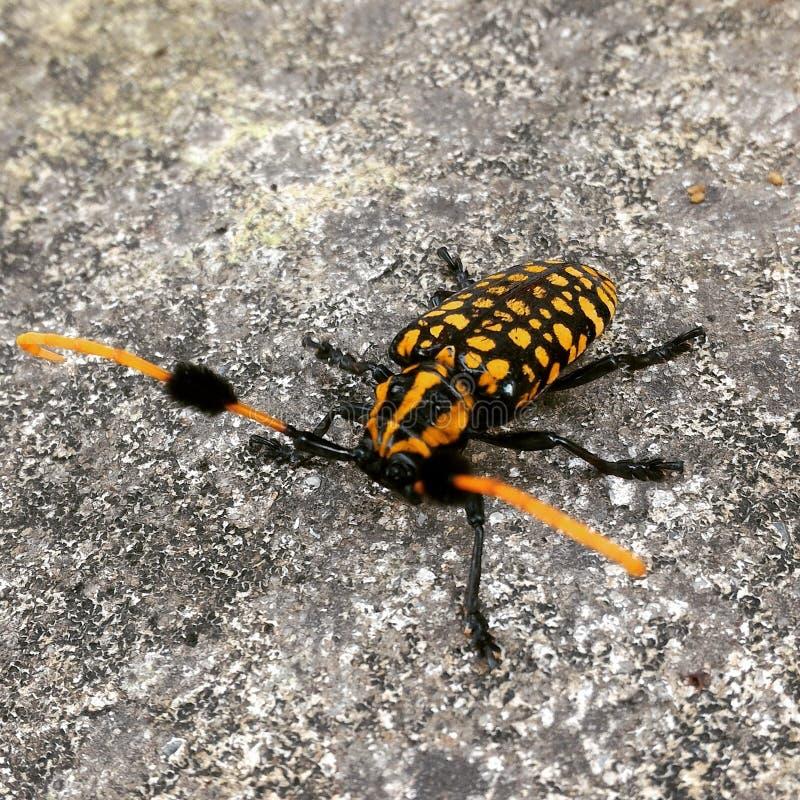 bug fotografia stock