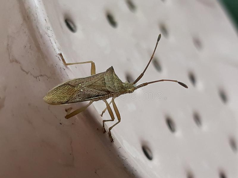 Bug& x27; s生活 免版税库存图片