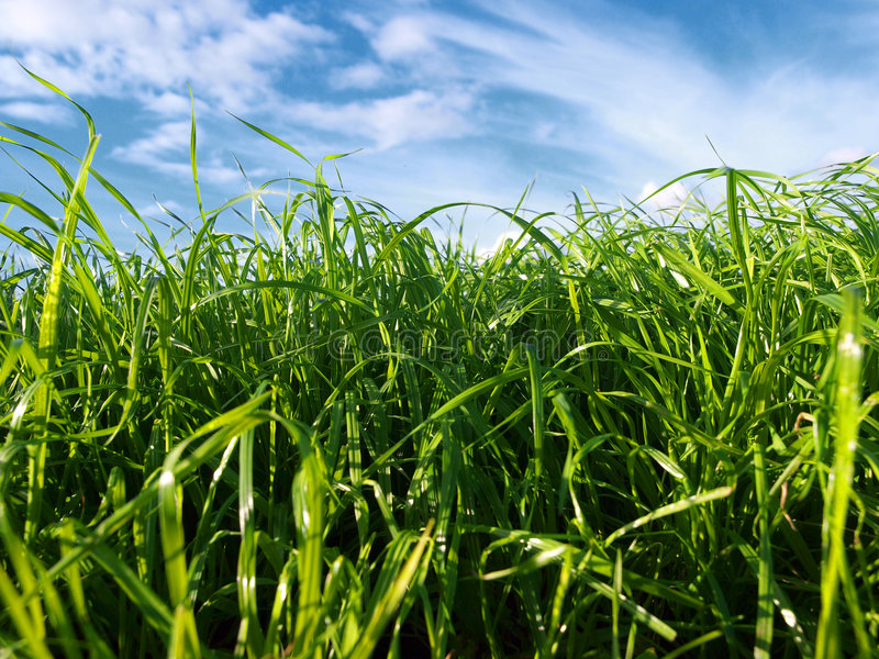 Download Bug's Eye View stock photo. Image of summer, background - 9229446