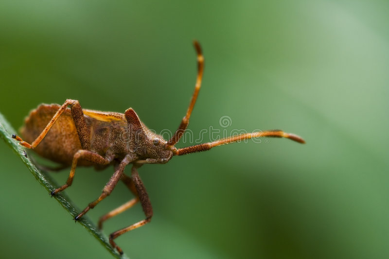 Bug's Life stock image