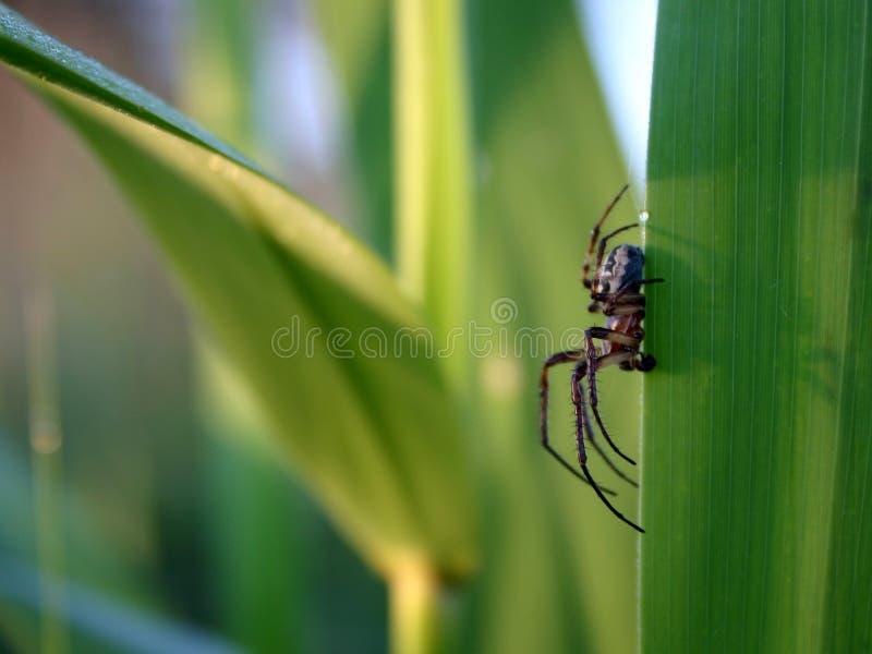 Bug's life stock photo