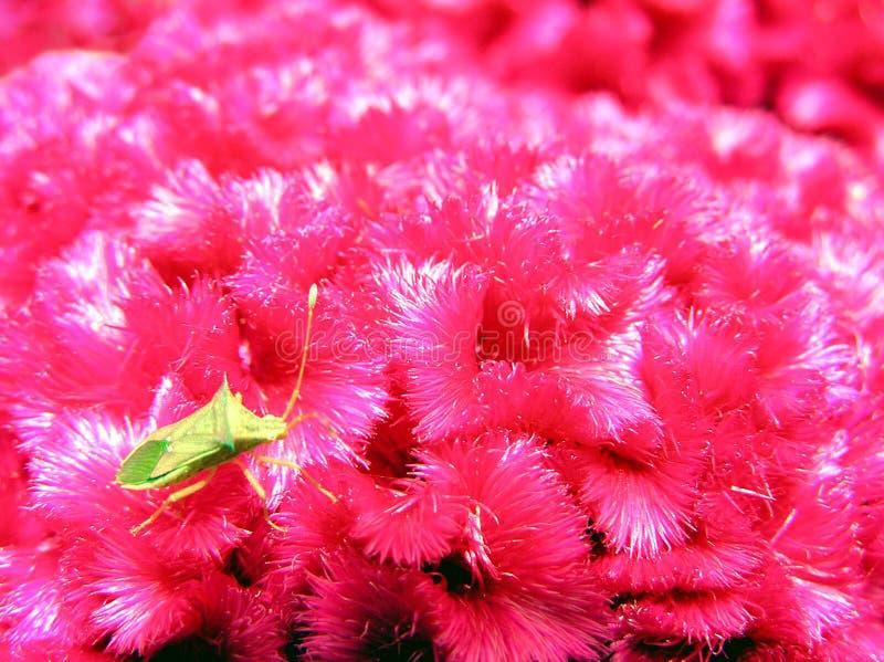 Download Bug samotna zdjęcie stock. Obraz złożonej z czerwień, insekty - 39100