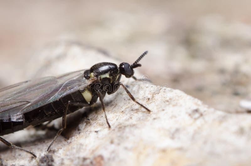 Download Bug on a stone stock image. Image of fauna, animal, color - 35060275