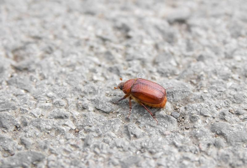 Download Bug on tarmac stock image. Image of concrete, cockroach - 9477353