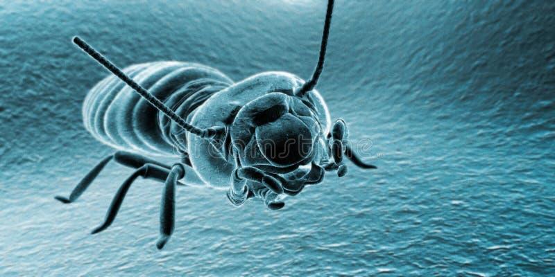 bug termit ilustracji
