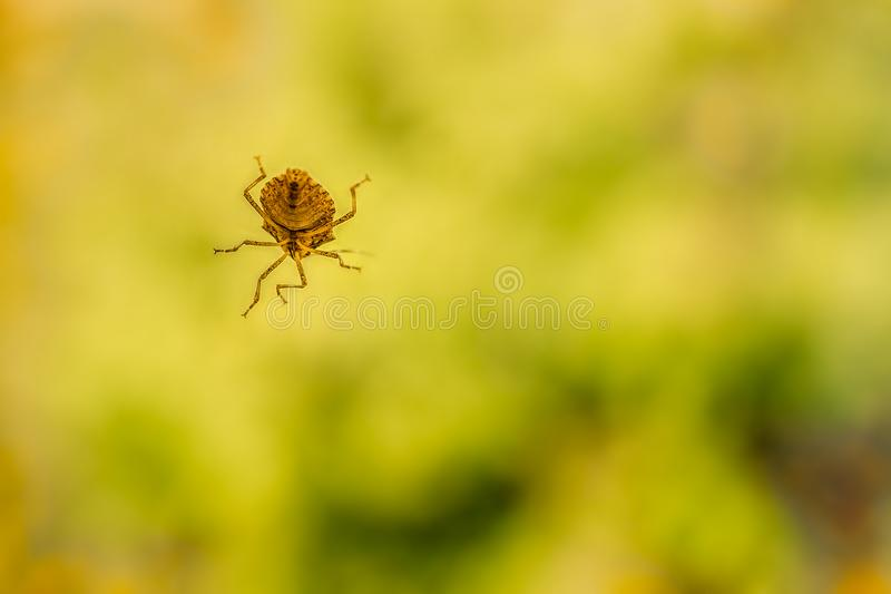 Bug on window royalty free stock images