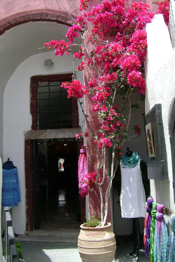 Buganvília de florescência ao lado da casa foto de stock