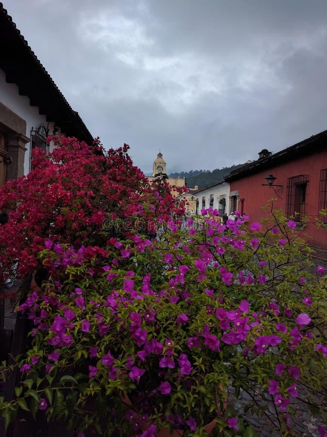 Buganvilia Antigua Guatemala fotografía de archivo libre de regalías